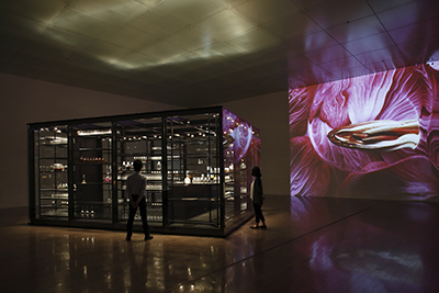 """""Chamber to Taste Curiosity"" 21st Century Museum of Contemporary Art, Kanazawa Photo: Kikou Keizo"