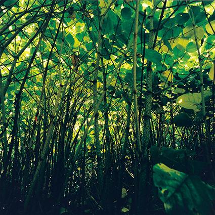©Watanabe Koichi 「Moving Plants#904」