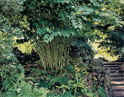 ©Watanabe Koichi「Moving Plants#406」 ライデン大学付属植物園、オランダ