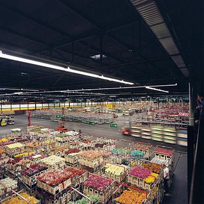 ©Watanabe Koichi「Moving Plants#811」 アールスメール花市場、オランダ