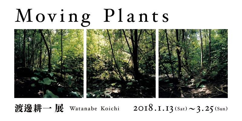 「渡邊 耕一展 Moving Plants」
