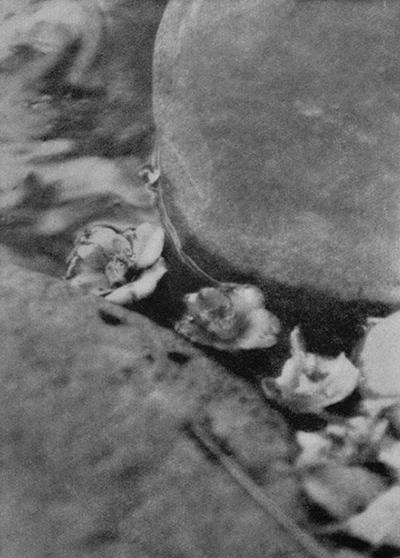 福原信三 光と其諧調より 1922